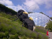 At the eden project. Bee at the eden project Stock Images