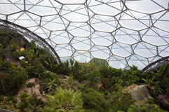 Eden project inside the biome Royalty Free Stock Photography