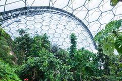 Eden Project - Inside the Tropical Biome. Eden Project is situated in Cornwall, England. This is a view of the tropical biome Royalty Free Stock Photography