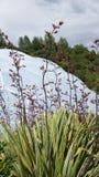 Eden projekta biome w St Austell Cornwall obraz stock