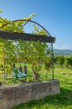 Edenkoben Valley,german Wine Route,Germany Royalty Free Stock Photography
