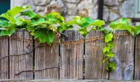 Edera che cresce lungo la cima di un recinto di legno consumato con la parete di pietra vaga nei precedenti fotografia stock libera da diritti