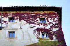 Edera colorata sulla facciata Fotografie Stock Libere da Diritti