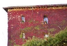 Edera colorata sulla facciata Fotografia Stock