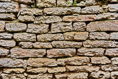 Edera contro la parete di pietra Fotografie Stock Libere da Diritti