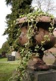 Edera del cimitero Fotografie Stock