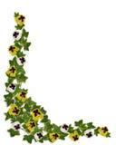 Edera e bordo floreale dei Pansies Fotografia Stock Libera da Diritti