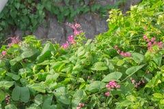 Edera e fiori Fotografia Stock Libera da Diritti