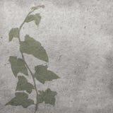 Edera verde su vecchia struttura della carta dell'oggetto d'antiquariato di lerciume fotografia stock libera da diritti