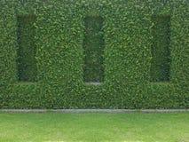 Edera verde sulla parete con erba immagine stock libera da diritti