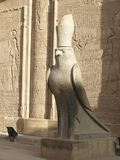Edfu temple, Egypt, Africa. Egyptian falcon god Horus in front of Edfu temple royalty free stock photography