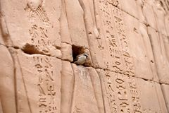 Edfu Temple in Egypt. The Edfu temple ruins in Egypt by the River Nile Royalty Free Stock Photos