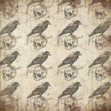 Edgar Allan Poe - kruk - czaszka - Nevermore - Makabryczny Halloween - Ciemny humor - got - ilustracji
