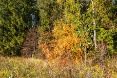 On the edge of the autumn forest. Royalty Free Stock Photography
