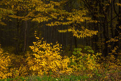 Edge of autumn forest Royalty Free Stock Image
