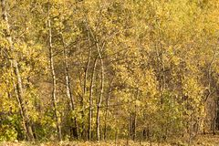 An edge of autumnal forest Royalty Free Stock Image