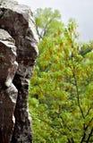 The Edge blef przy diabła stanu Jeziornym lasem obrazy stock