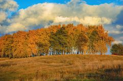 Edge of the colorful forest in autumn Stock Photography