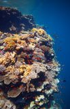Edge of coral reef Stock Photos