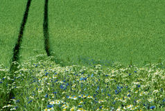 Edge of a crop field Royalty Free Stock Images