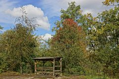 Edge of deciduous forest with a wooden building Stock Photo