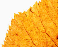 Edge of dry leaf close up Stock Photo