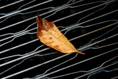 On the edge of falling. A Single Yellow Leaf on the Ground on a Black Metal Sidewalk Gutter Grate Royalty Free Stock Photo