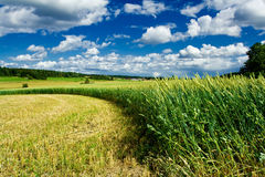 Edge of field. Curved edge of a green wheat field Royalty Free Stock Photos