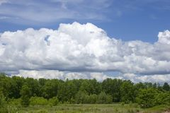 Edge of forest. With puffy clouds against blue skies Royalty Free Stock Photos