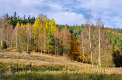Edge of forest during the autumn Stock Photo