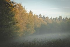 Edge of forest in early morning golden sunlight with fog rolling in through branches stock photography