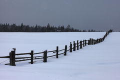 The edge of the forest and fence on winter night Stock Photos