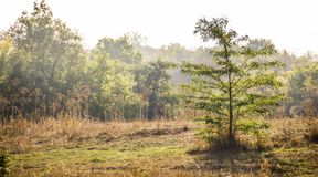 Edge of the forest. At the edge of the forest in the morning Royalty Free Stock Photo