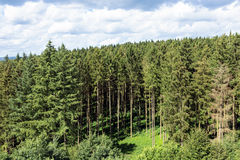 Edge of the forest near Bouillon in Belgium Stock Images