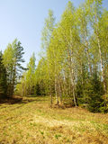 Spring landscape in Central Russia Royalty Free Stock Photos