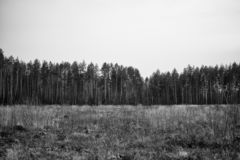 On the edge of the forest. Trees stock images