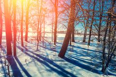 Edge of forest in winter. Floodplain forest. Trees in frozen water royalty free stock photos
