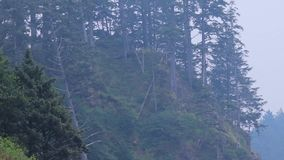 Edge of a forested cliff. On a beach with drift wood stock video