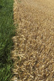 Edge of grain field. Royalty Free Stock Photos