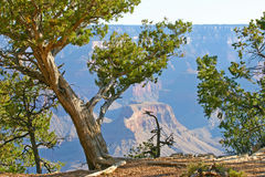 Edge of the Grand Canyon Royalty Free Stock Photo