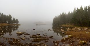 Edge of a lake surrounded by a pine forest on a foggy day, Font-Romeu royalty free stock image