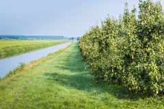 At the edge of a pear orchard Stock Image