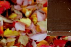 Edge of picnic table and fallen leaves. Fallen red and gold tree leaves that have collected underneath a picnic table in a public park signal the beginning of Royalty Free Stock Photo