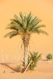 Edge of the Sahara Royalty Free Stock Photo