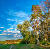 The edge of the spring forest in the evening sun Royalty Free Stock Image
