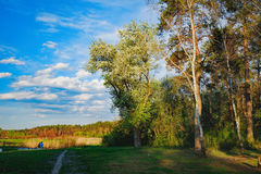 The edge of the spring forest in the evening sun Royalty Free Stock Images