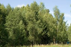 Edge of the summer deciduous forest. stock photos