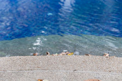 Edge of swimming pool in hotel resort Royalty Free Stock Photo