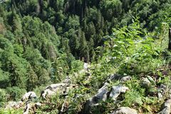 Edge of viewpoint in Slovak Paradise. Viewpoint with view deep down to forest in Slovak Paradise National Park in Slovak Republic stock photo