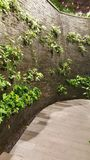 Edge. Wall tree Instead of bare concrete fence Stock Photos